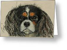 Cavalier Greeting Card