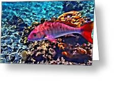 Cayman Snapper Greeting Card