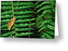 Cedar And Fern Greeting Card