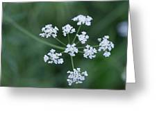 Cedar Park Texas Hedge Parsley Greeting Card
