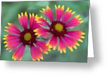 Cedar Park Texas Indian Blanket Greeting Card