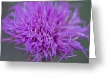 Cedar Park Texas Purple Thistle Greeting Card