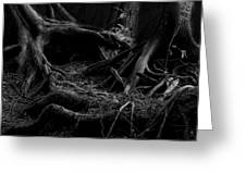 Cedar Roots Black And White Greeting Card