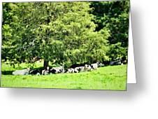 Cedar Shade Greeting Card