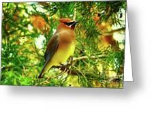 Cedar Waxwing Beauties 11 Greeting Card