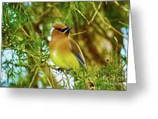Cedar Waxwing Beauties 17 Greeting Card
