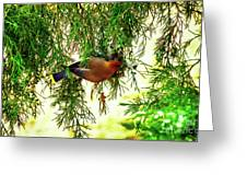 Cedar Waxwing Beauties 19 Greeting Card