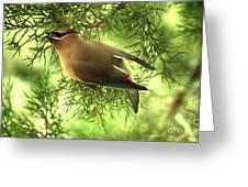 Cedar Waxwing Beauties 2 Greeting Card