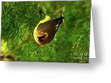 Cedar Waxwing Beauties 9 Greeting Card