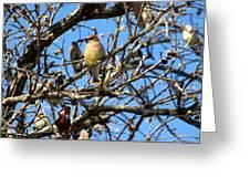 Cedar Waxwing II Greeting Card