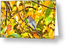 Cedar Waxwing In Autumn Leaves Greeting Card