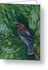 Cedar Waxwing In Lilac Greeting Card