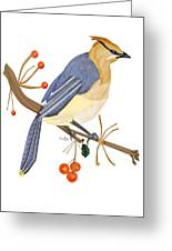 Cedar Waxwing In The Berries Greeting Card