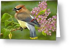 Cedar Waxwing On Lilac Greeting Card by Karen Coombes
