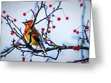 Cedar Waxwing Painting Greeting Card