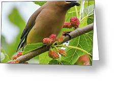 Cedar Waxwing With Mulberries Greeting Card