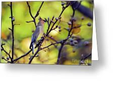 Cedar Waxwing With Windblown Crest Greeting Card