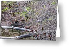 Cedar Waxwings Feeding Greeting Card
