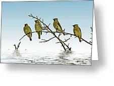 Cedar Waxwings On A Branch Greeting Card