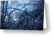 Cedars Of Ice Greeting Card