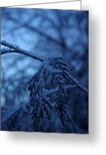 Cedars Of Ice II Greeting Card