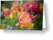 Celebration Of Color Greeting Card