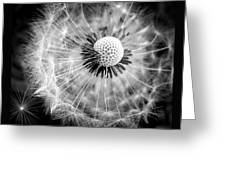 Celebration Of Nature In Black And White Greeting Card