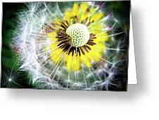 Celebration Of Nature Greeting Card