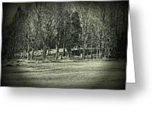 Cemetery In The Woods Greeting Card