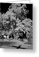 Cemetery Infrared Greeting Card