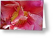 Center Of A Pink Camellia At Pilgrim Place In Claremont-california  Greeting Card