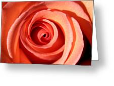 Center Of The Peach Rose Greeting Card
