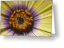 Center Of The Universe Greeting Card