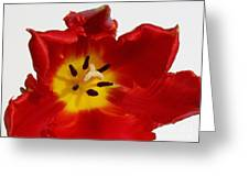 Center Of Tulip Greeting Card