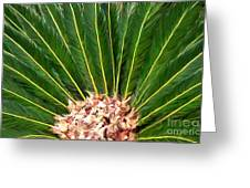Centered Palm Greeting Card