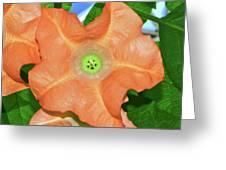 Centerpiece - Angel Trumpet 005 Greeting Card