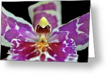 Centerpiece - Purple Orchid Macro Greeting Card