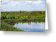 Central Florida Backwater Greeting Card