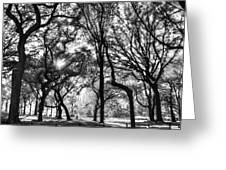 Central Park In Black And White Greeting Card