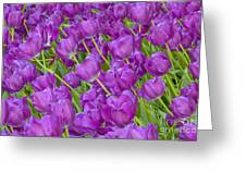 Central Park Spring-purple Tulips Greeting Card