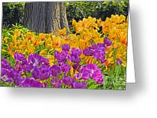 Central Park Tulip Display Greeting Card