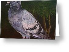 Central Park Visitor - Pigeon Greeting Card