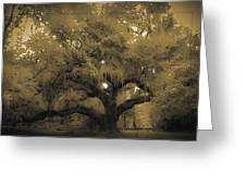 Centurion Oak Greeting Card