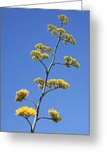 Century Plant Flowers Greeting Card