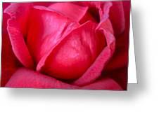 Chachacha Greeting Card
