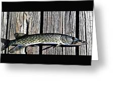 Chain Pike Greeting Card