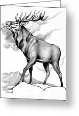 Challenge Stag 2 Greeting Card
