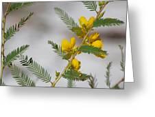 Chamaecrista Fasciculata Sleeping Plant Partridge Pea Greeting Card