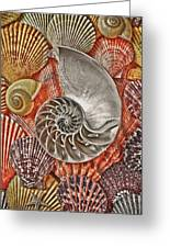 Chambered Nautilus Shell Abstract Greeting Card by Garry Gay