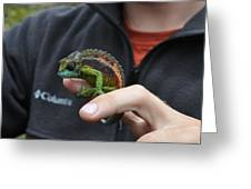 Chameleon 1 Greeting Card